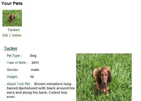 pet profile my virtual neighbor